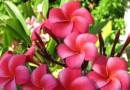 """""""La mulţi ani"""", florile noastre dragi!"""