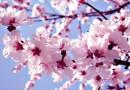 Câţi români îşi serbează onomastica de Florii?