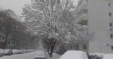 iarna br
