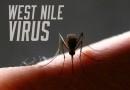 Evoluția infecțiilor cu virus West Nile în perioada 14-20 septembrie