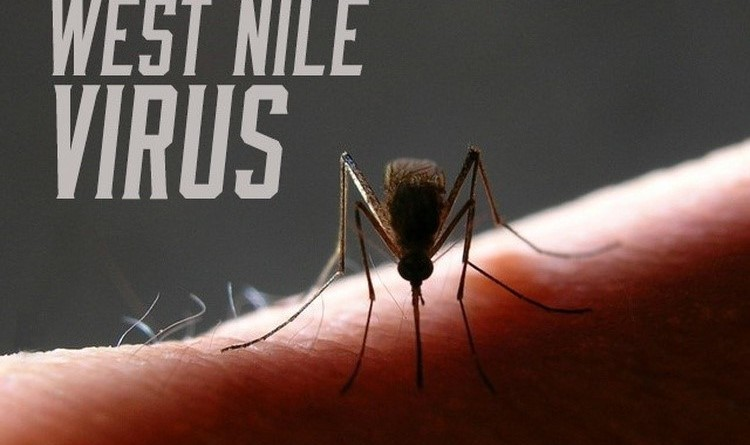 West-Nile-Virus