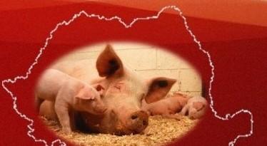 pesta-porcina-atentie