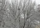 Vremea la Brăila până la sfârșitul lunii ianuarie