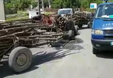 Prinși cu lemne furate