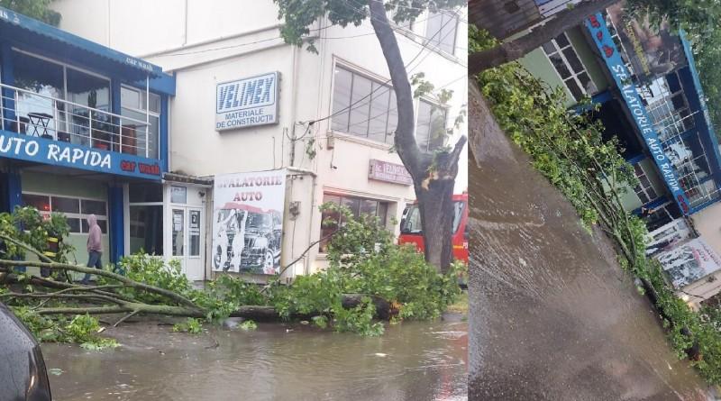 Copaci căzuți din cauza furtunii din această după amiază