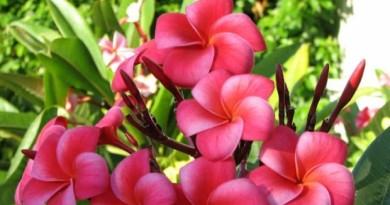 floriiii